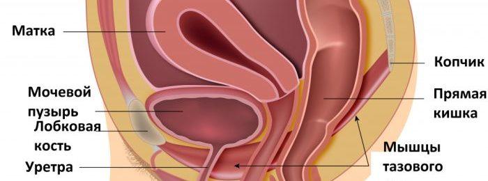 что такое простата у женщин